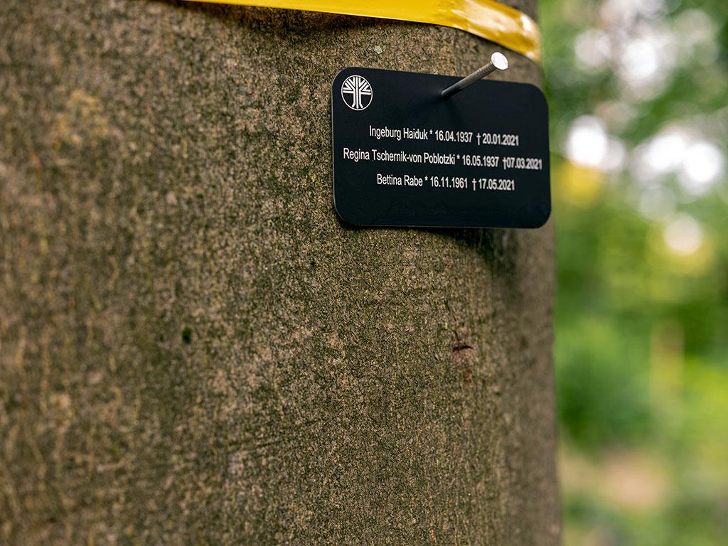 Unter dem gelben Band wurde nach der Beisetzung von FriedWald- Förster- oder Försterin die Namenstafel befestigt. Nach Ablauf der Ruhefrist werden Inschrift und Namenstafel wieder entfernt.